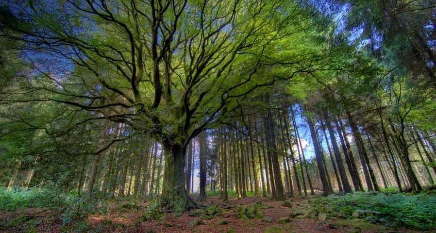 Forêt de Paimpont, Côtes-d'Armor, Bretagne