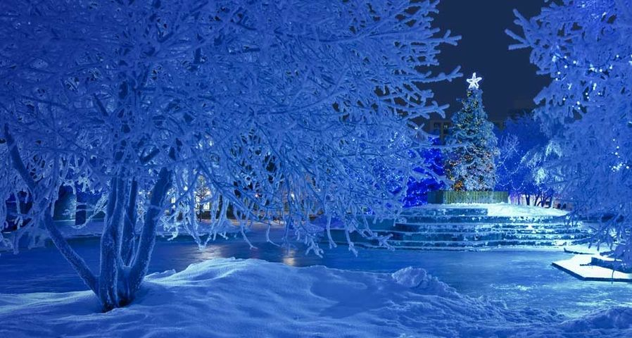 Nighttime view of the Christmas tree and blue light decorations in Anchorage's Town Square, Alaska, USA