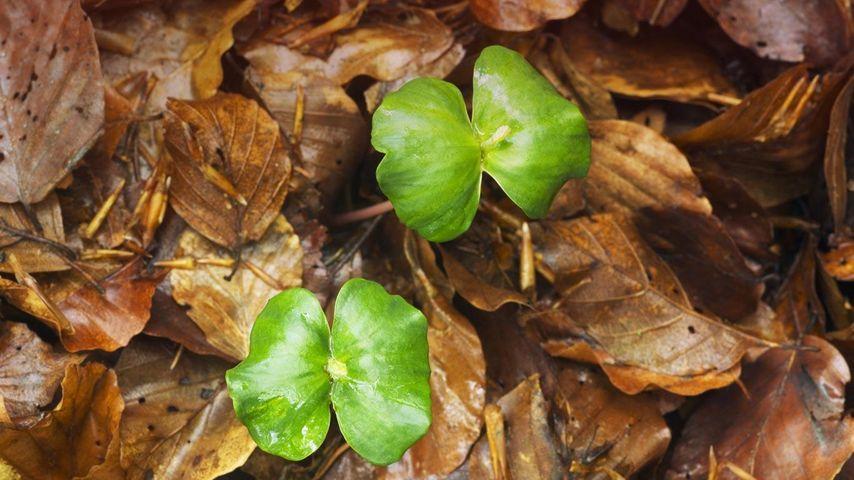 德国凯勒瓦尔德–埃德湖国家公园内的幼苗