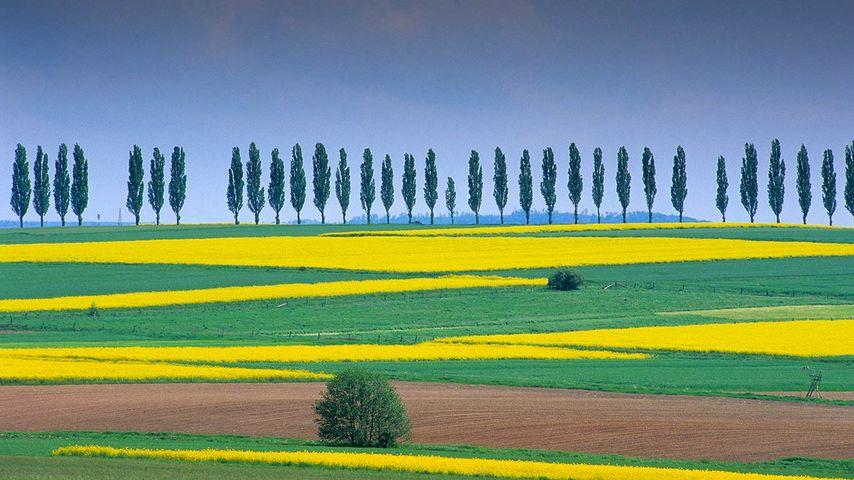 Rapsfelder bei Duderstadt, Eichsfeld, Niedersachsen, Deutschland