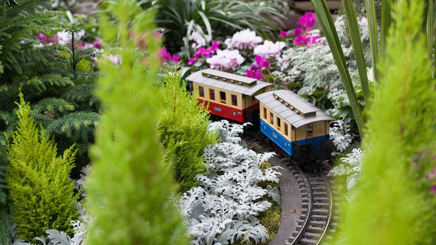 Train surrounded by Christmas flowers at Allan Gardens Conservatory, Toronto