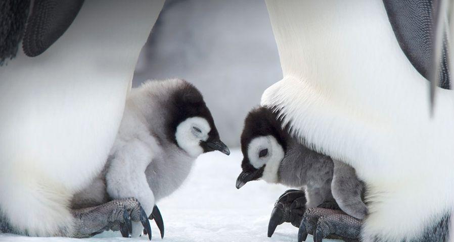 """从""""新""""开始:新生的企鹅宝宝寄托新的希望"""