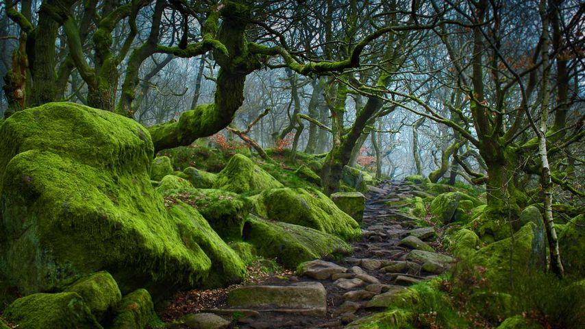 「パドレー峡谷」イギリス, ダービシャー