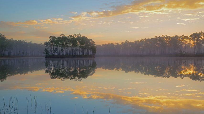 Long Pine Key dans le parc national des Everglades, Floride, États-Unis