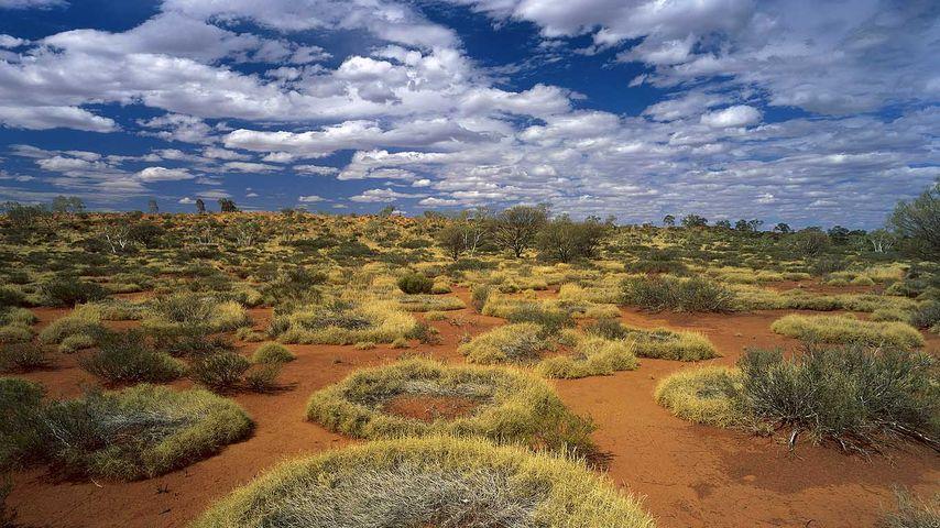 Spinifex rings in Little Sandy Desert, Western Australia