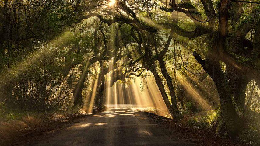 Botany Bay Road, Edisto Island, South Carolina
