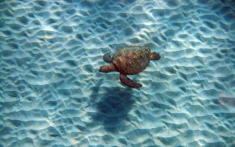 Turtles and Tortoises Windows 10 Theme