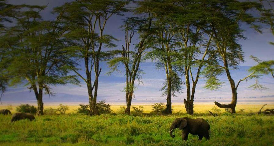 坦桑尼亚恩戈罗恩戈罗火山口