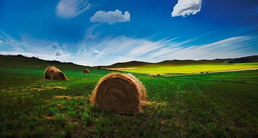 携程&MSN十年旅行摄影大赛作品精选:内蒙古呼伦贝尔草原