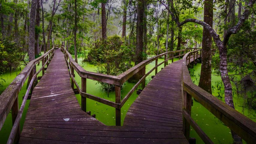 Wooden walkway in the Whooping Crane Pond Conservancy on Hilton Head Island, South Carolina