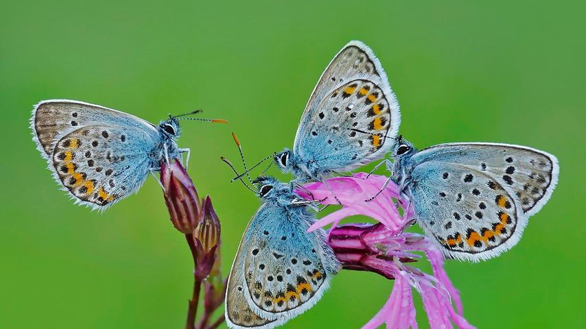 Butterflies in the Regional Park of Castelli Romani, Italy