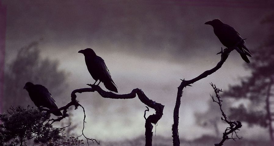 岁月的童话:七只乌鸦