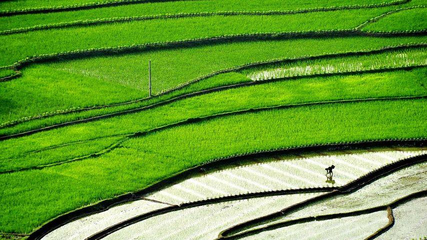 【今日谷雨】四川省,正在梯田里插秧的农民