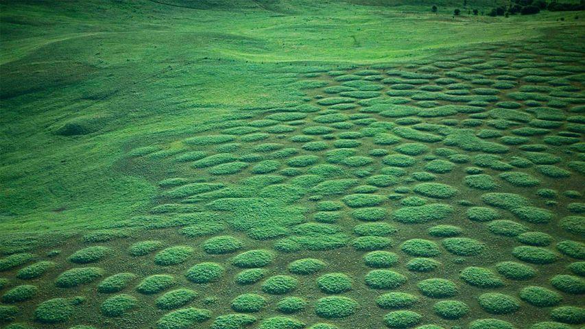 Mima mounds at Oregon's Zumwalt Prairie, USA
