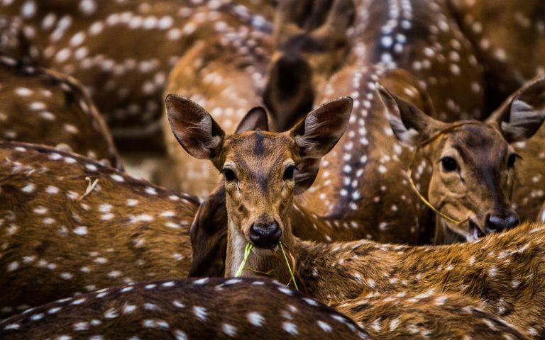 India's beautiful wildlife