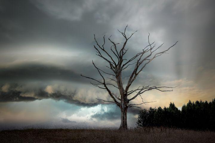 sky cloud outdoor landscape tree fog cloudy clouds