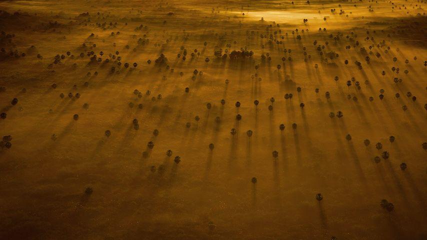 Bäume im Nebel, Pantanal, Brasilien