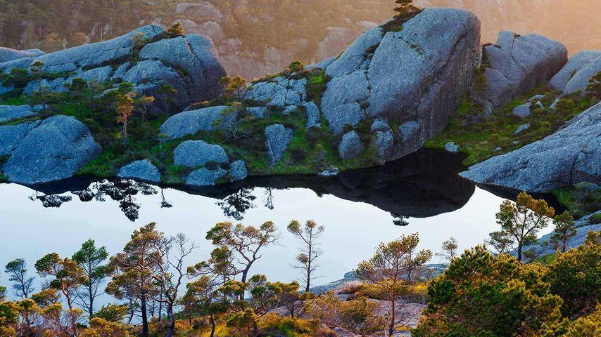 苏拉群岛上的苏格兰松树,松恩-菲尤拉讷,挪威