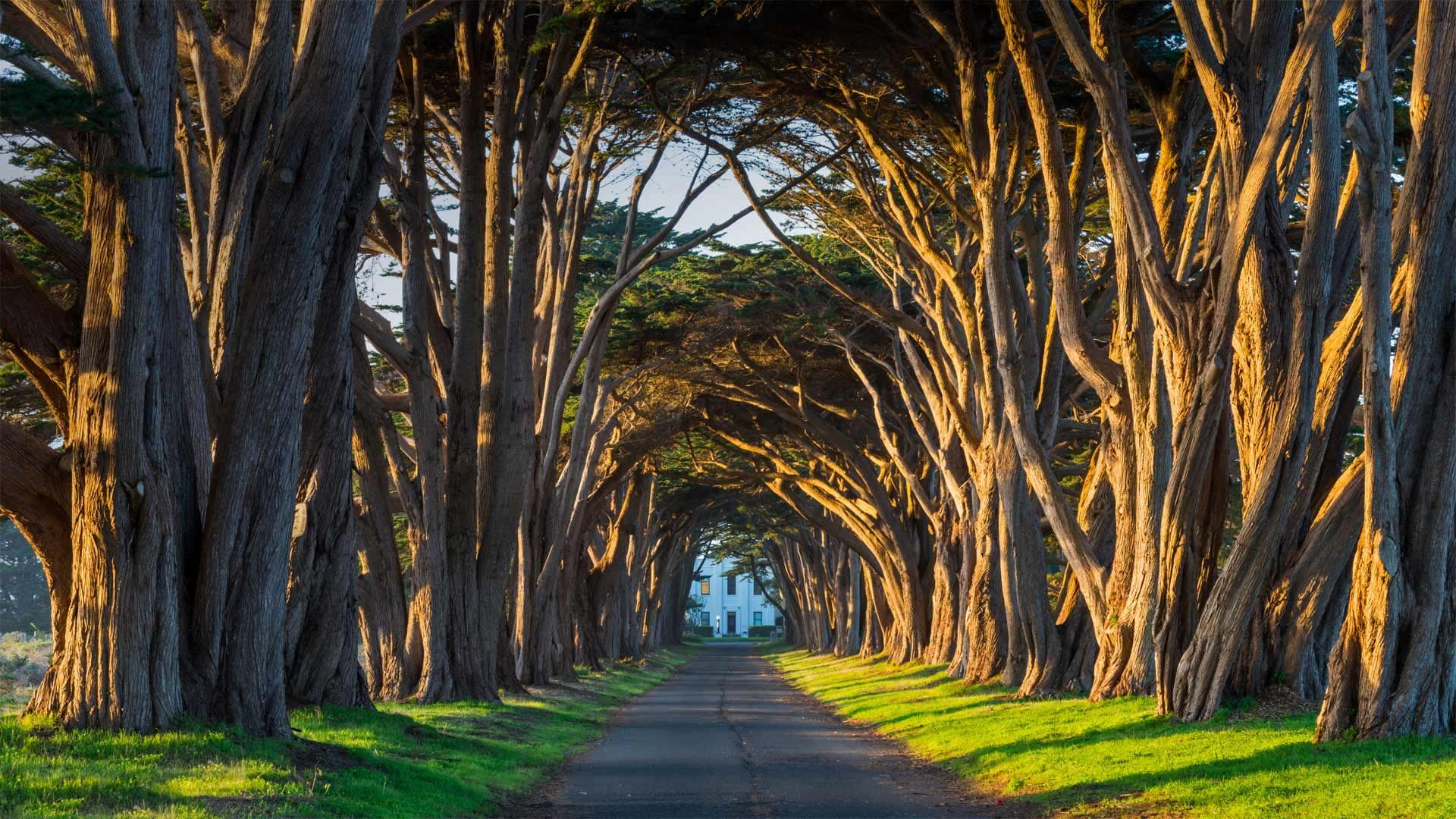 The cypress tunnel at Point Reyes National Seashore in California