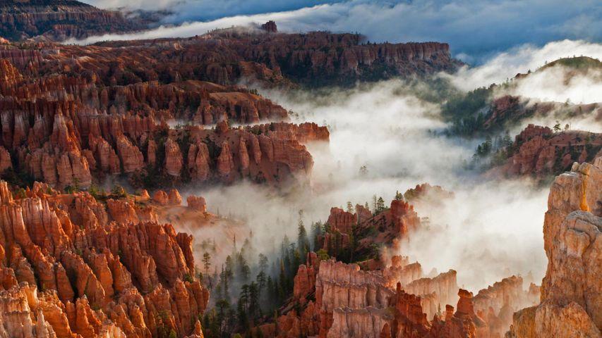 Brouillard sur le parc national de Bryce Canyon, Utah