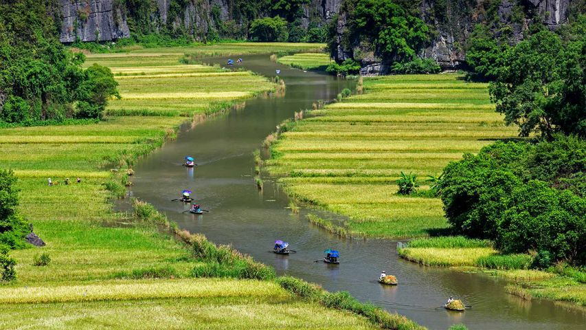 Boats float by rice fields on the Ngo Dong River in Ninh Binh province, Vietnam