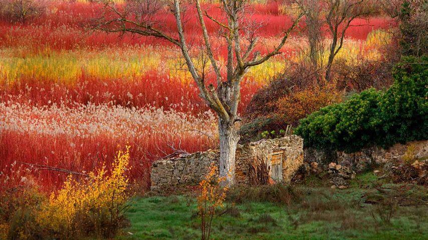 Wicker fields near Cuenca, Spain