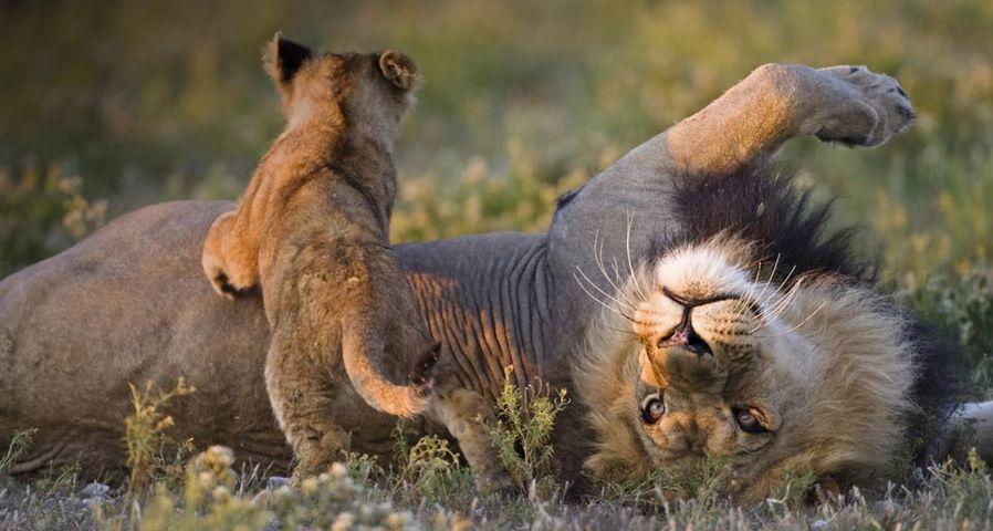 岁月的童话:狮子王
