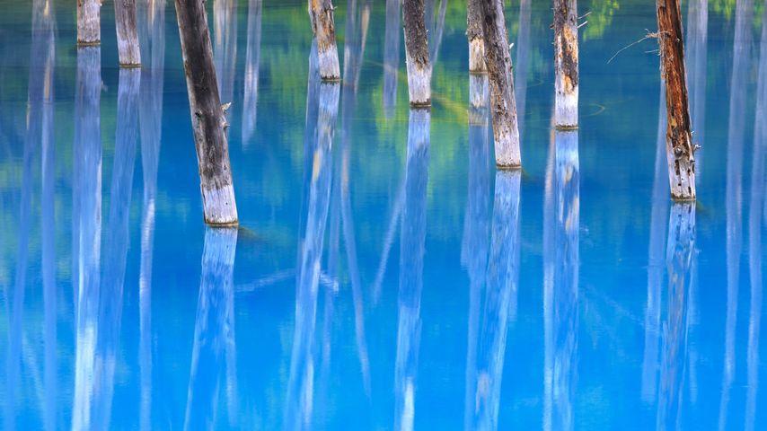 Blue Pond in Biei, Hokkaido, Japan