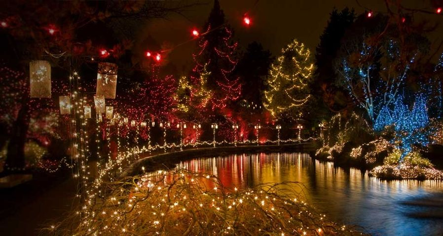 Holiday lighting in Japanese Maple and other trees at the VanDusen Botanical Garden Festival of Lights in Vancouver, B.C., Canada