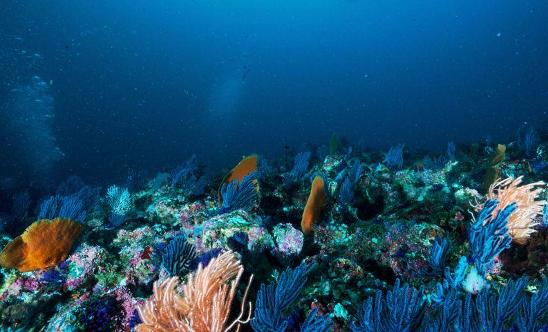 diving aquarium scuba water fish marine invertebrates swimming snorkeling