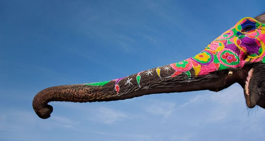 Painted elephant's trunk in Jaipur, India
