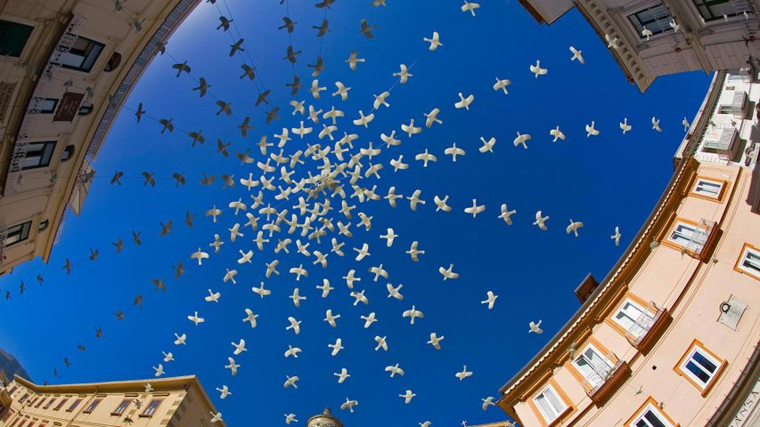 Dove art installation above the Piazza del Duomo in Amalfi, Italy