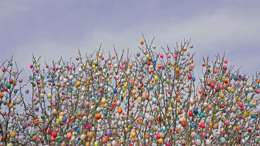 An Ostereierbaum (Easter egg tree) in Saalfeld, Germany