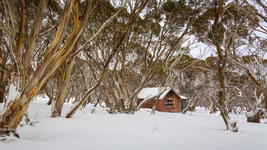 Cattleman's hut at Dinner Plain, Victoria