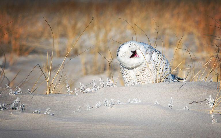animal outdoor owl bird mammal bird of prey dry