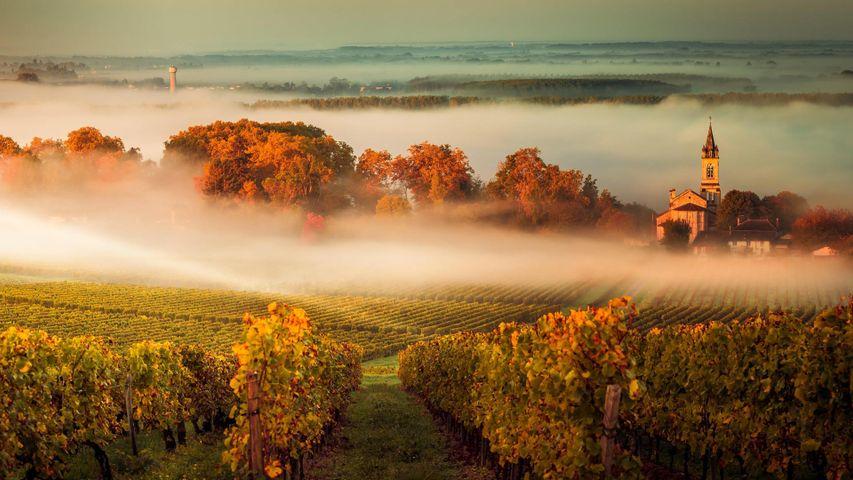 Nebelverhangene Landschaft im Weinanbaugebiet Bordeaux, Frankreich