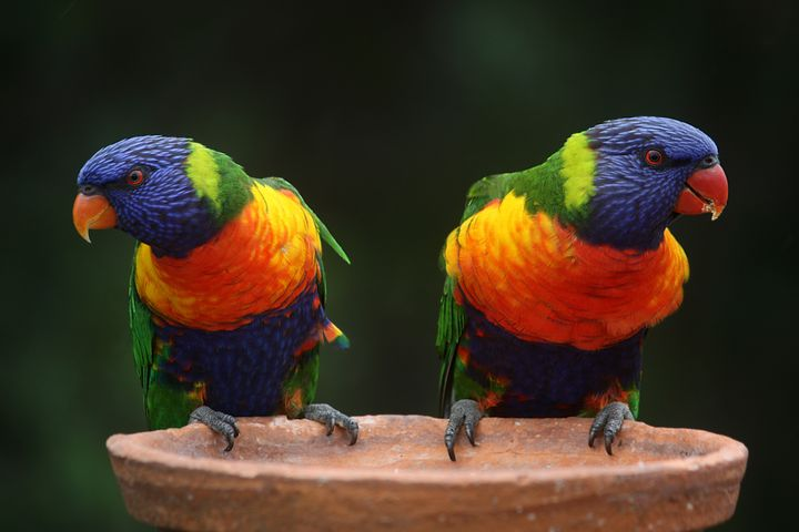 bird colorful parrot sitting outdoor perched animal colored