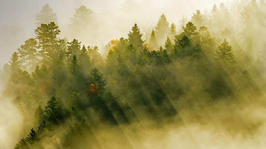 Rayons de soleils s'infiltrant à travers les nuages flottant au-dessus d'une forêt de conifères, Massif des Vosges