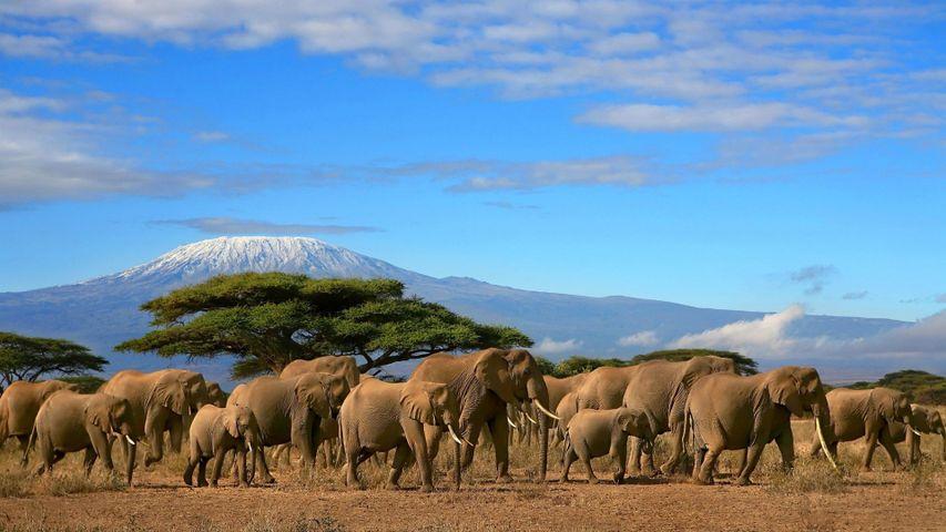 sky elephant outdoor herd grass group animal mountain