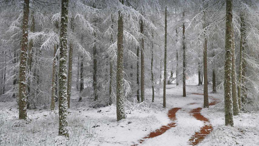 北孚日地区自然公园,法国