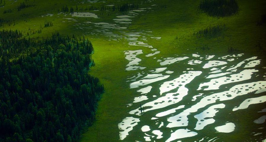 「アンカレッジの湿地帯」アメリカ, アラスカ州
