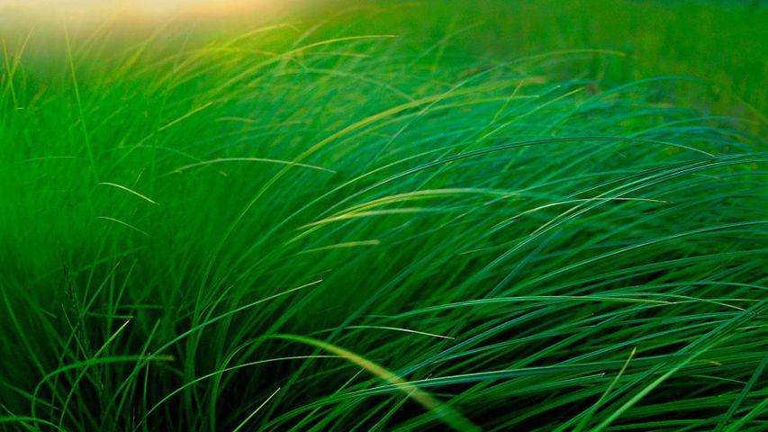 L'herbe d'une prairie près d'un lac à Moose Lake, Minnesota
