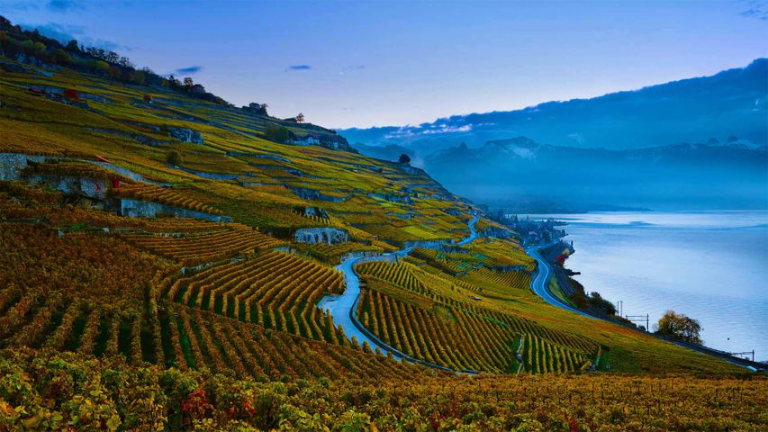 Steeply terraced vineyards of the Lavaux region on the shores of Lake Geneva, Switzerland