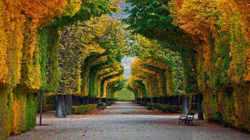【今日立秋】美泉宫花园的秋日景色, 奥地利维也纳