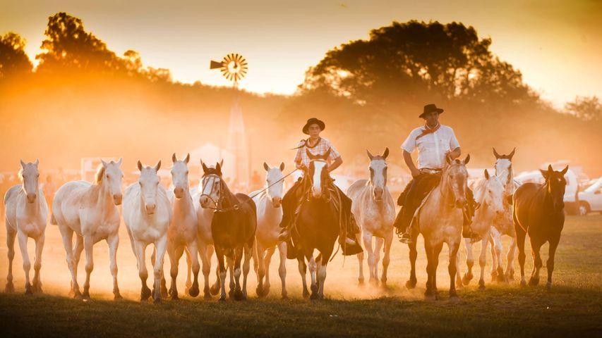 Gaucho festival in San Antonio de Areco, Buenos Aires Province, Argentina