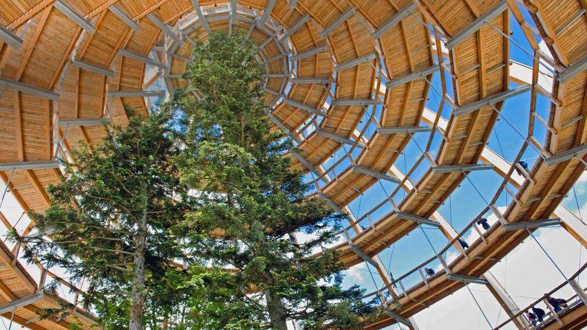 「樹上散歩道」ドイツ, バイエルン森林国立公園