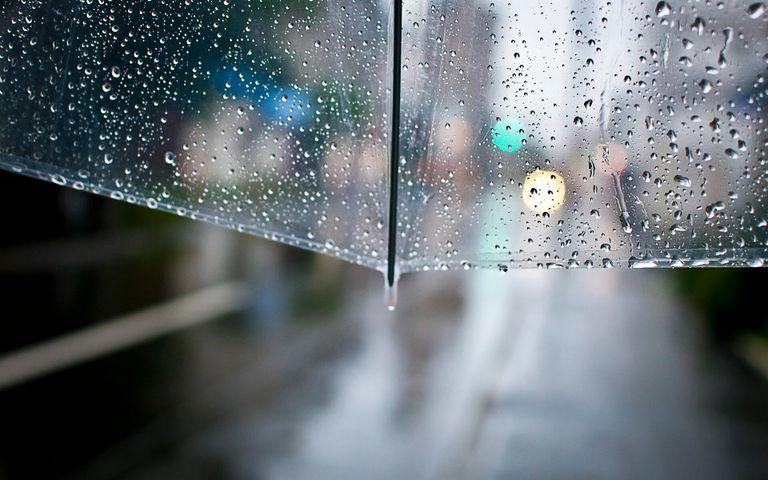 rain nature water
