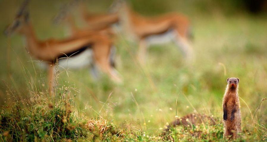 肯尼亚马赛马拉国家保护区中可爱的动物