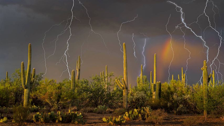 Lightning storm in the Tortolita Mountain foothills, north of Tucson, Arizona, in the Sonoran Desert