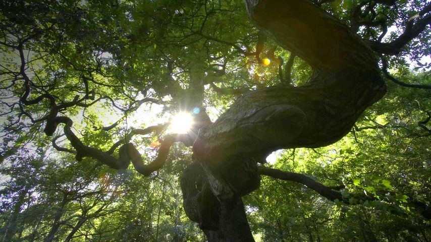 Sunlight emerging through trees in Sherwood Forest